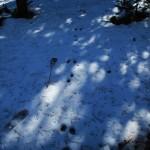 Vos spoor sneeuw