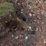 snuitputjes nabij boomstronk
