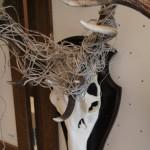 overige sporen edelhert cervus elaphus 02