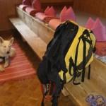hond-en-buitensport-07