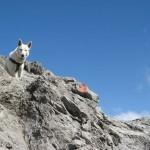 hond-en-buitensport-09