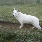 hond-en-buitensport-10