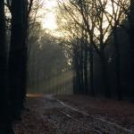 Utrechtse-Heuvelrug-Kwintelooyen-05