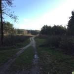 Utrechtse-Heuvelrug-Leersumsche-Plassen-15