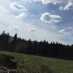 Winterberg-Mountainbike-Route-11-7