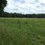 MTB-Maashorst-groene-route-06