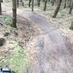MTB-Maashorst-groene-route-10